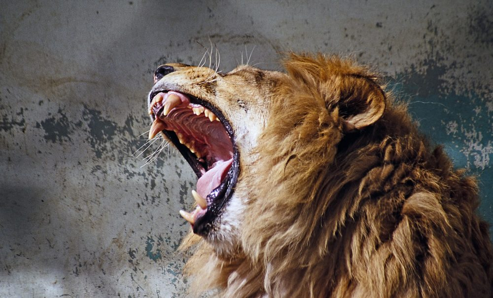 Can you guess the definition of an alpha male? I'm pretty curious about what most people's definition would be. Maybe they'll claim that the biggest guy in the room is the alpha. Others might claim that the strongest or the most aggressiveguy might be the alpha. Maybe it's the guy with the highest testosterone levels.